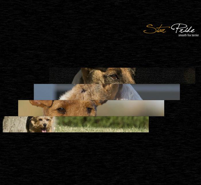 Star Pride Fox Terrier